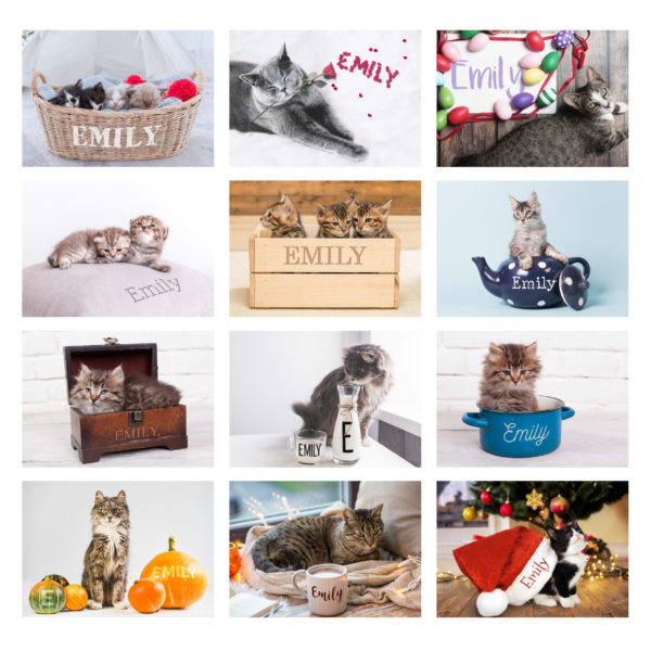 Cats and Kittens Desk Calendar