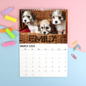 A4 Barking Mad Calendar