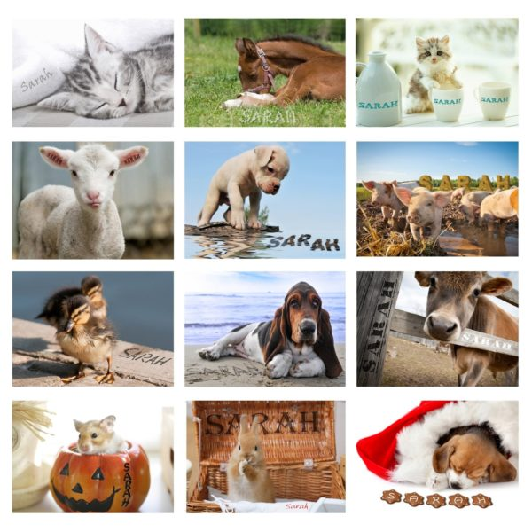 Cute Animals A4 Wall Calendar