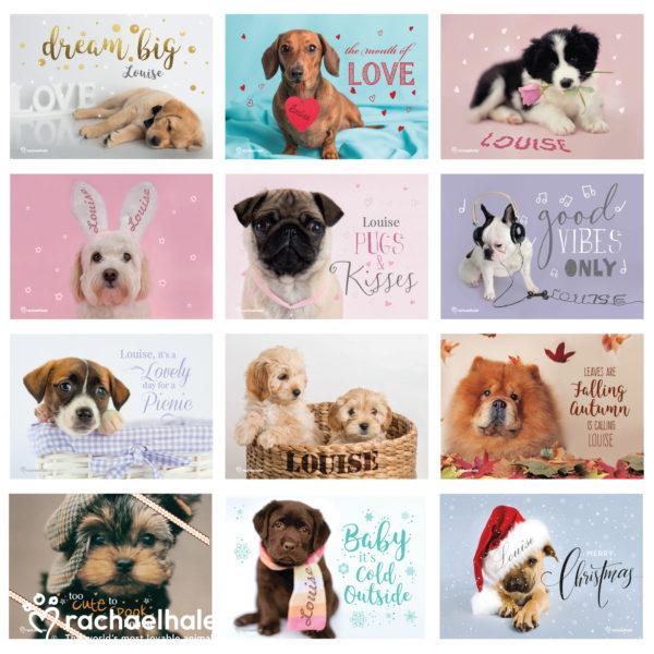 Rachael Hale 'The Cutest Dogs' A4 Wall Calendar
